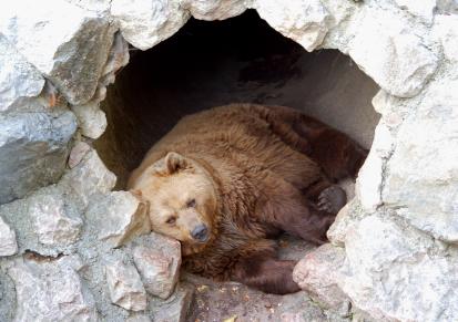 bears-hibernation